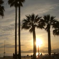 cannes-palmiers